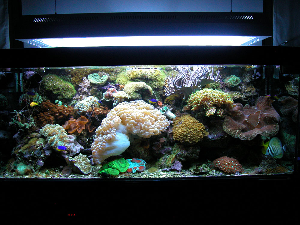 acquario 1°marino (2006) foto 1