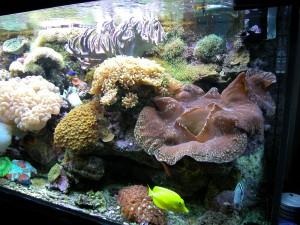 acquario 1°marino (2006) foto 2