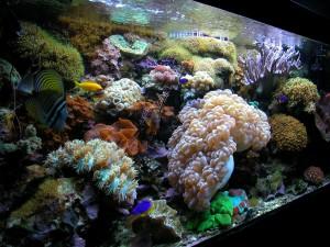 acquario 1°marino (2006) foto 4