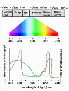 10 grafico della luce adatta alla fotosintesi