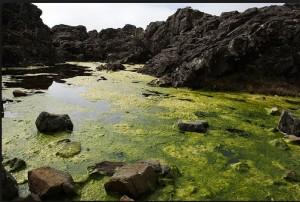 15 Alghe TURF in natura su corsi d'acqua dolce
